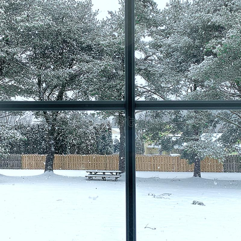 Window View of Winter Snow Storm in progress. View of Large Pine Trees and backyard covered in Snow. Ice Area royalty free stock photography