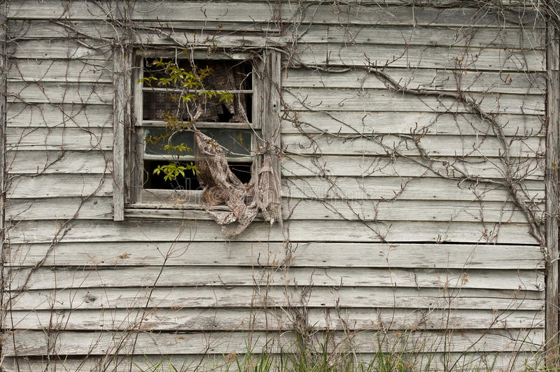Window with vines. Window of wooden home covered with vines royalty free stock image