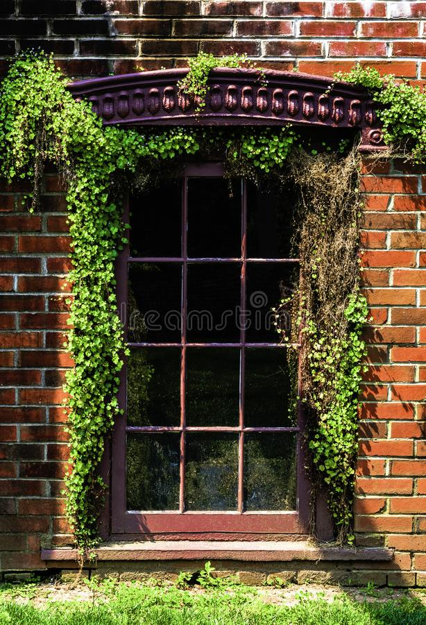 Window With Vines In And Out stock photo