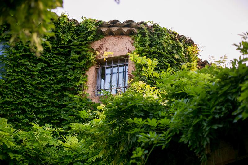 Window is withered in plants royalty free stock image