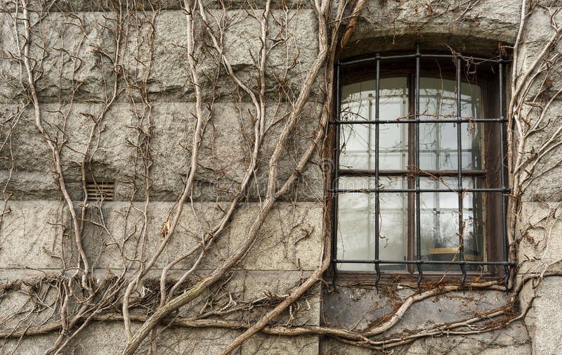 Window with wrought iron in medieval castle entwined, dry vine stock image
