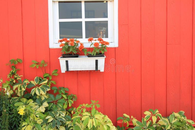Windows с деревянными штарками и свежими цветками стоковое фото