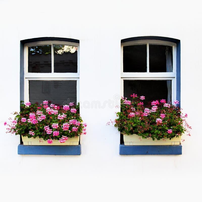 Windows с цветками стоковое изображение