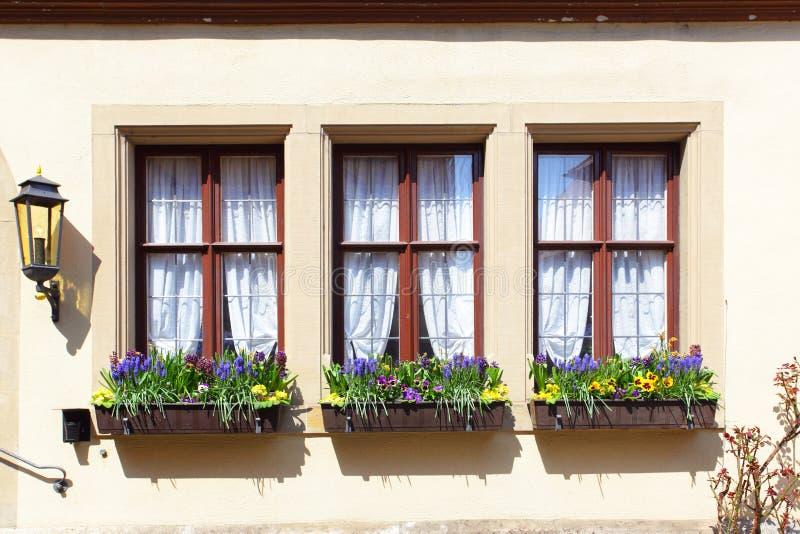 Windows с цветками стоковая фотография