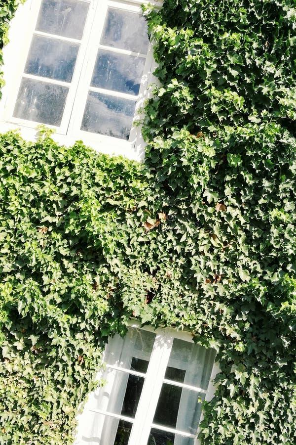 Windows biel na zielonym budynku zdjęcia royalty free