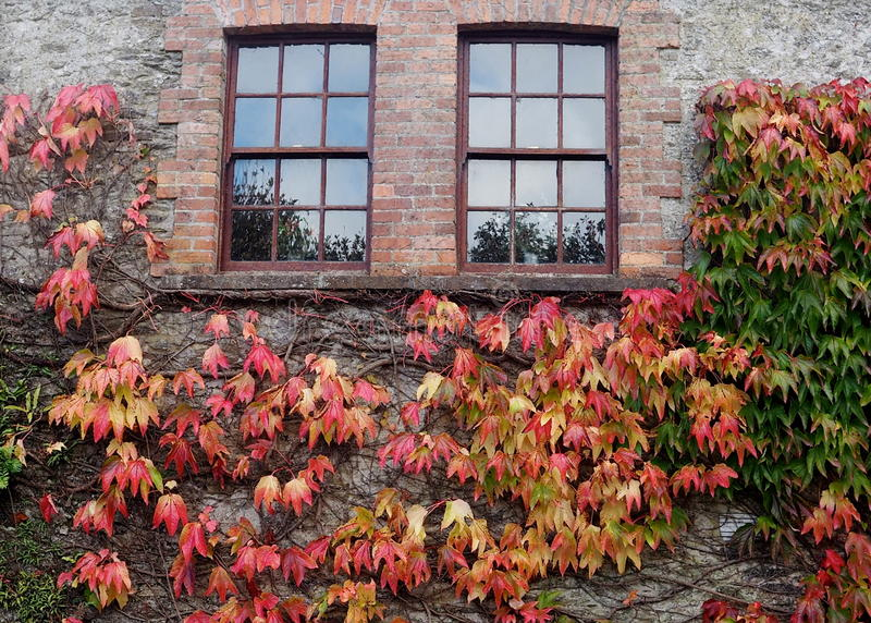 Windows, Brick Wall And Coloured Leaves stock photography