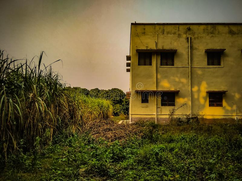 Windows of a building. Building along with a field of sugarcane stock photos
