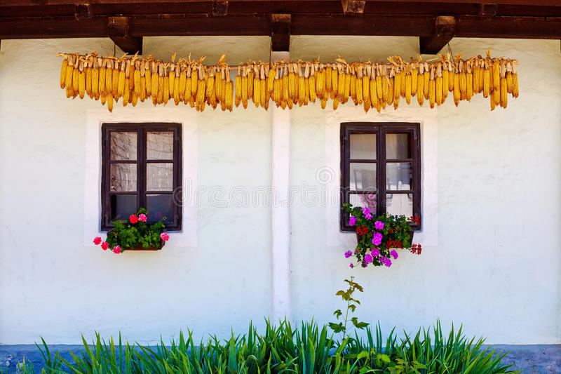 Windows and dry corn royalty free stock photos