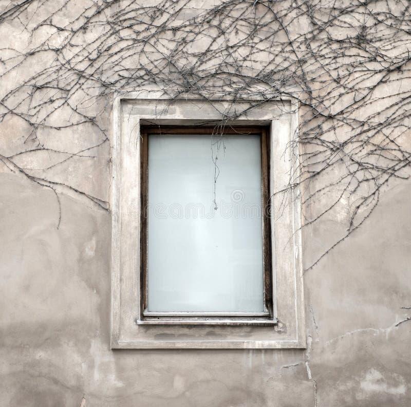 Windows e videira secada foto de stock