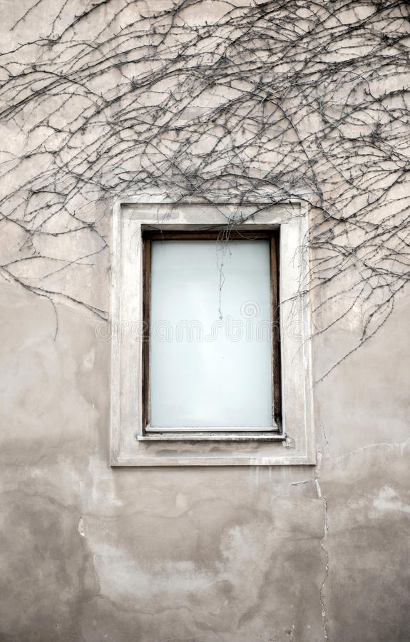 Windows e videira secada fotos de stock