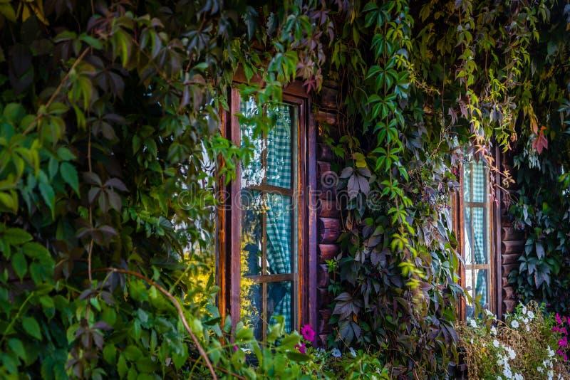Windows en la casa de madera demasiado grande para su edad con las plantas hermosas fotos de archivo libres de regalías