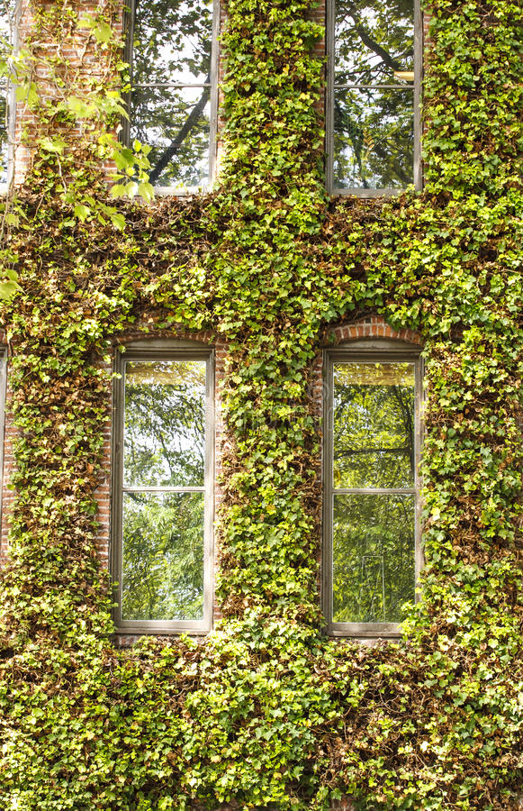 Free Windows In Vine Covered Building Stock Image - 26946401