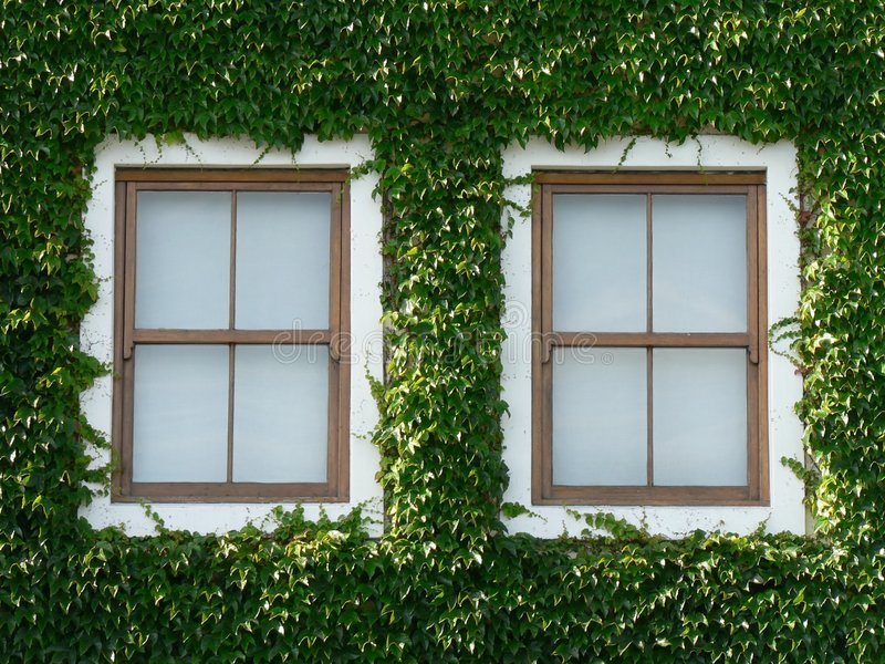 Windows and Ivy 02 royalty free stock photo
