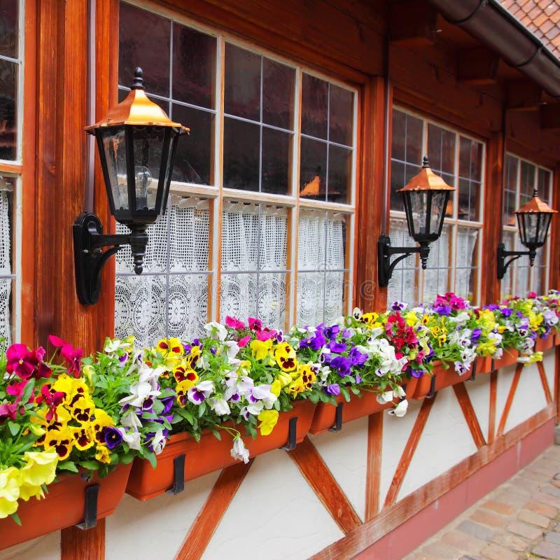 Windows med blomkrukor royaltyfri bild