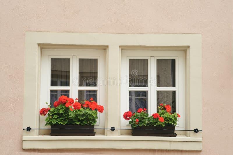 Windows mit Blume. lizenzfreie stockbilder