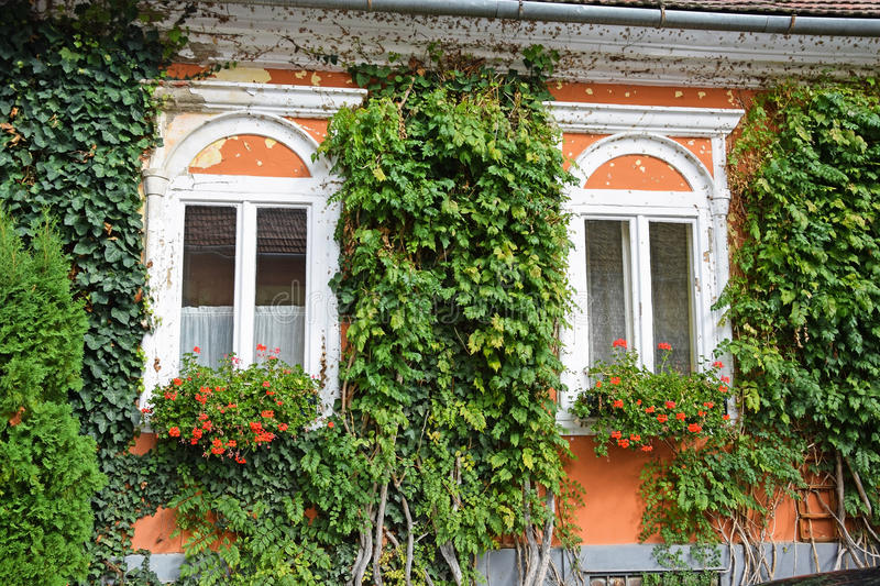 Windows of an old house with flowers stock image image for Classic house plants