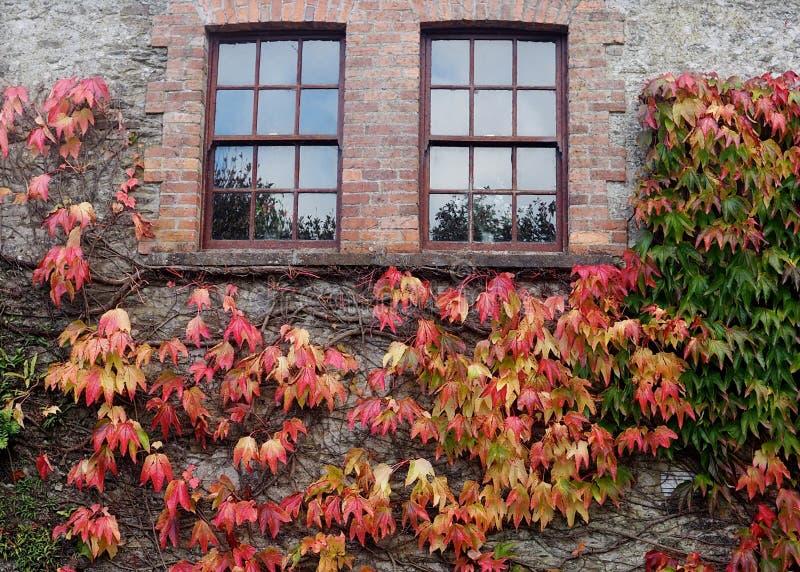 Windows, pared de ladrillo y hojas coloreadas fotografía de archivo