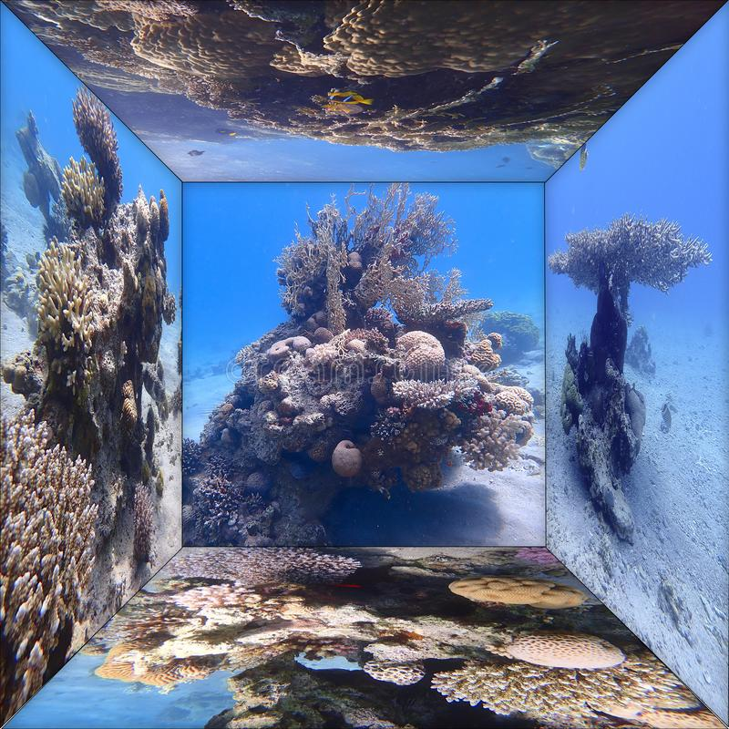Windows to the underwater world. Of the Red Sea coral reefs of the Gulf of Eilat stock photos