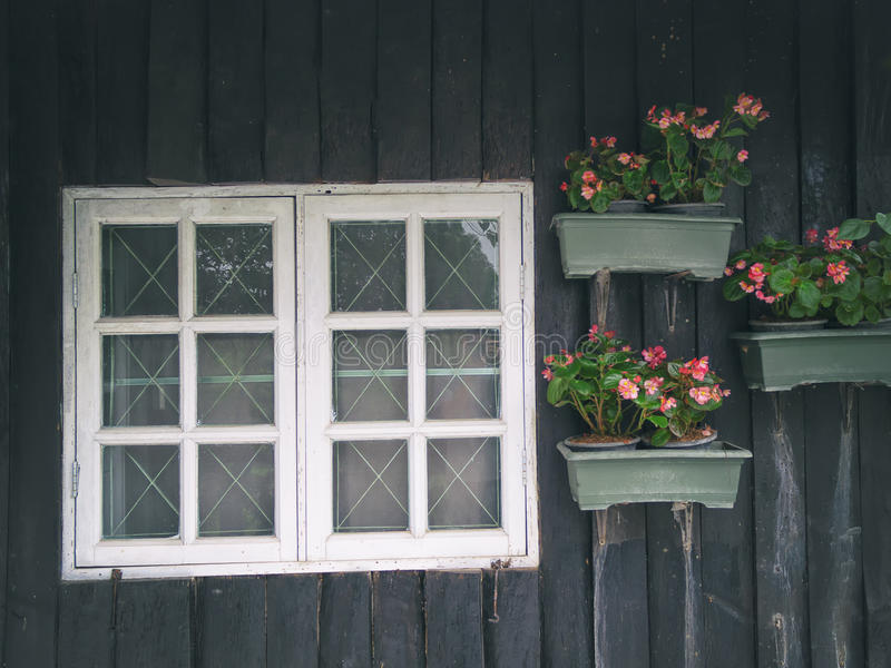 Windows und Blume lizenzfreie stockbilder
