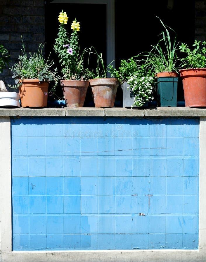 Windowsill с баками заводов стоковая фотография