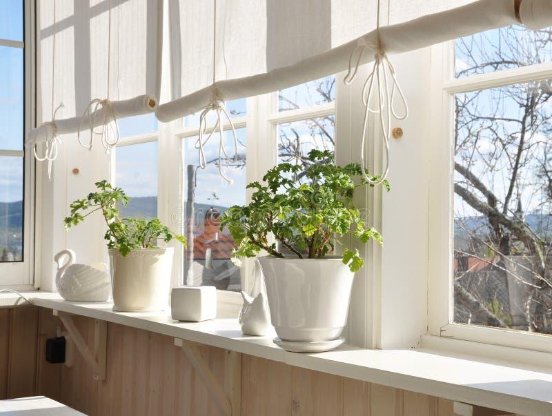 windowsill obrazy stock