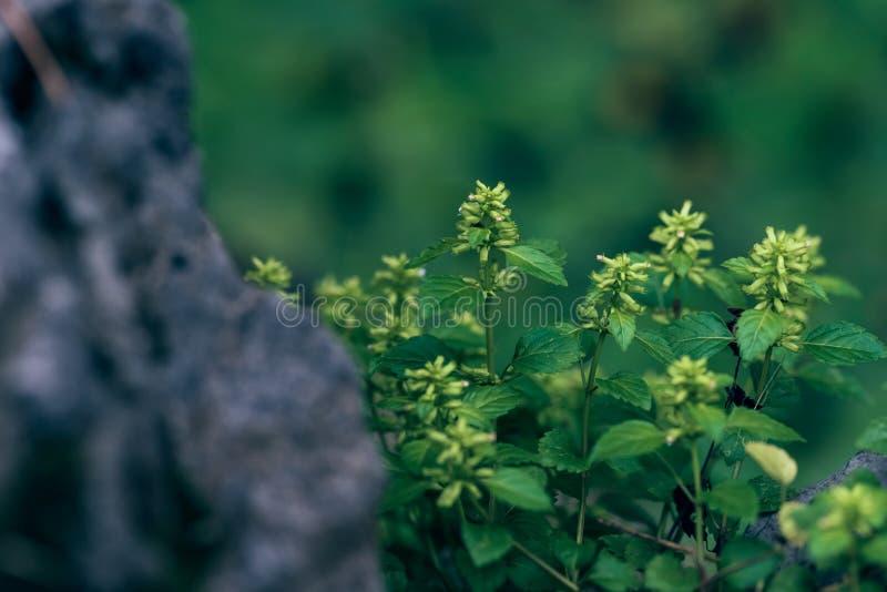 Windrad GemüseCalamint stockfoto