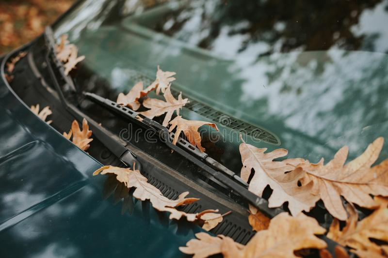 Windshield of a car full of fallen leaves royalty free stock images
