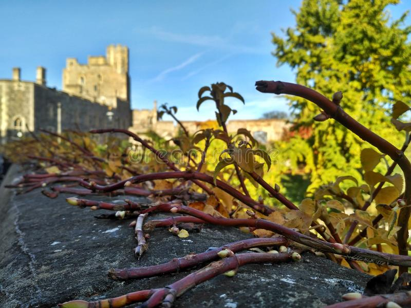 Windsor/Gran Bretagna - 2 novembre 2016: Pareti, costruzioni e torri di Windsor Castle un giorno soleggiato fotografia stock libera da diritti