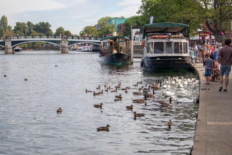 WINDSOR, MAAGDENVLIES & WINDSOR/UK - 22 JULI: Boten en vogelsalo royalty-vrije stock afbeeldingen