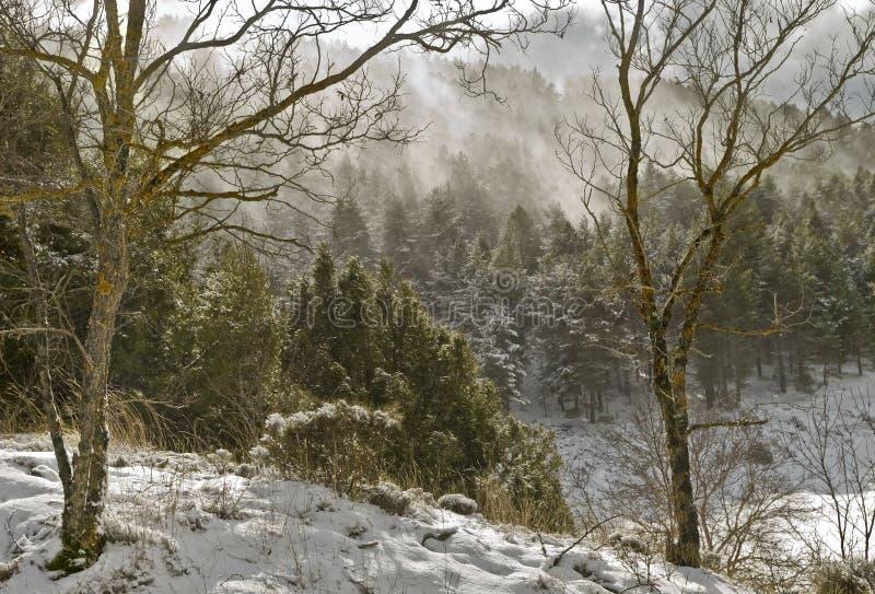 Windstorm im Wald lizenzfreie stockfotografie