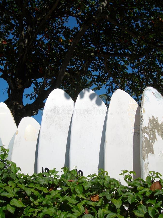 Windsurf les panneaux dans les tropiques photographie stock
