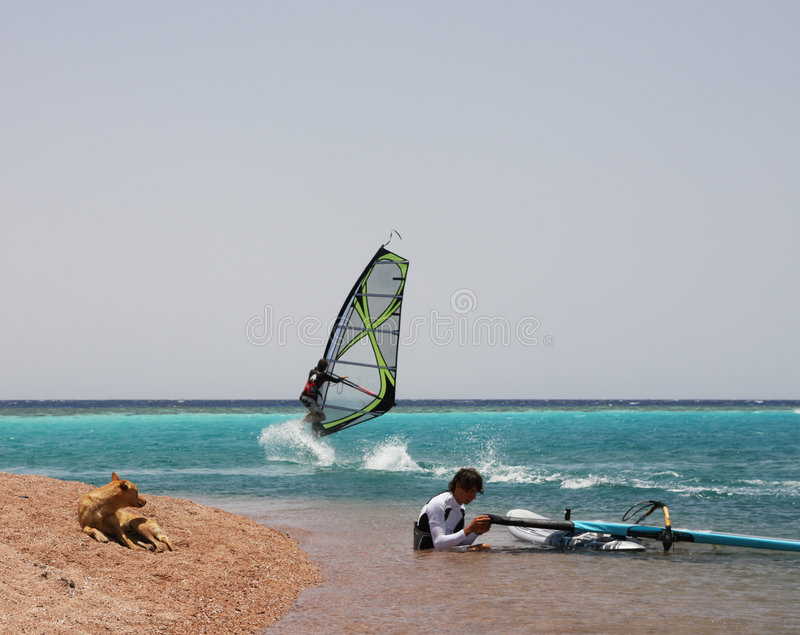 Windsurfers and a dog. royalty free stock images