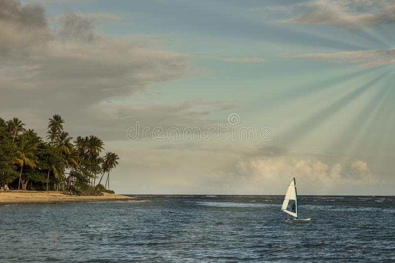 Windsurfing sail by the sea at sunset with palm trees in the background in Praia do forte, Bahia, Brazil stock images