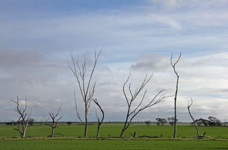 windswept images stock
