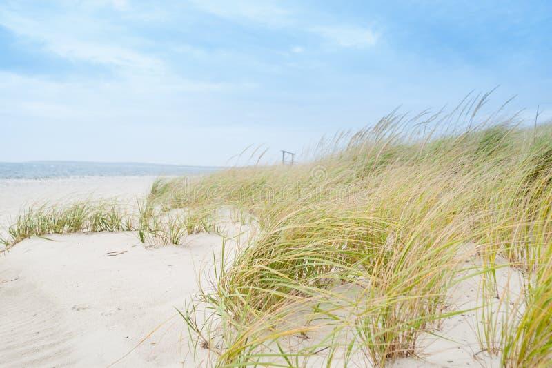 Windswept environment. stock image