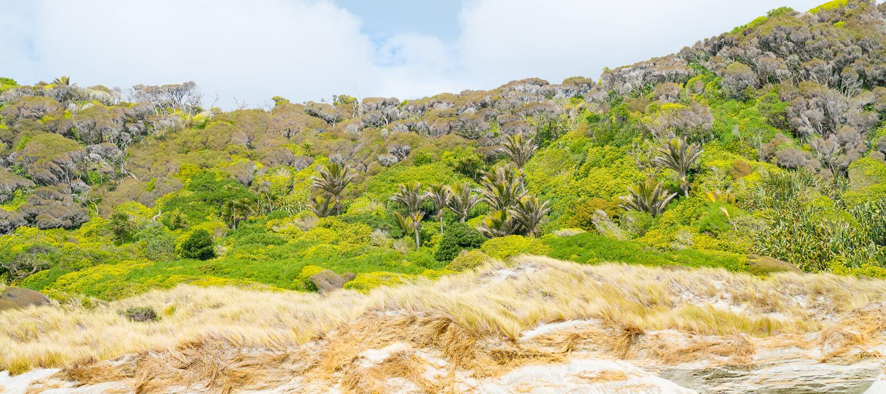 Windswept panorama van Nieuw Zeeland met altijdgroene inheemse struik voorbij de voorgrond van het strandgras royalty-vrije stock foto
