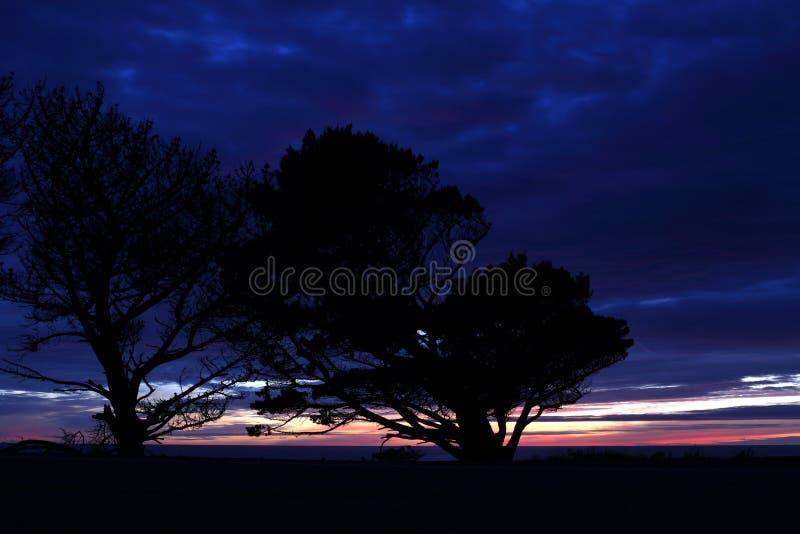 Windswept Silhouet Leunende Bomen en Vreedzame Oceaanzonsondergang royalty-vrije stock afbeelding