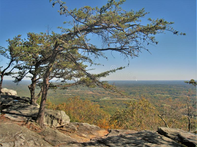 Windswept Tree at Hanging Rock State Park royalty free stock photos