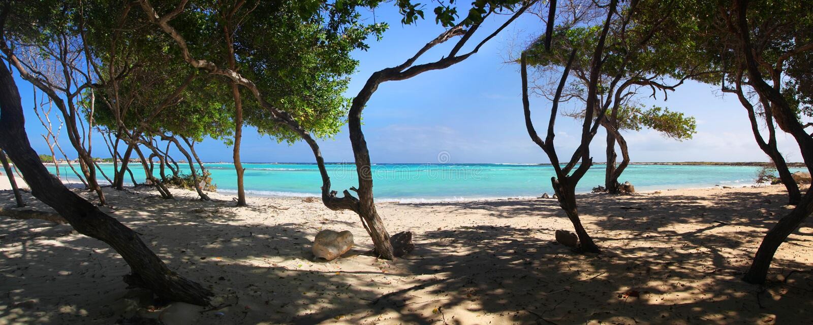 Turquoise waters and windswept trees of Baby Beach Aruba royalty free stock image