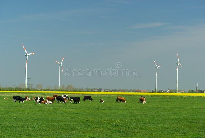 Windturbin och kor arkivbild