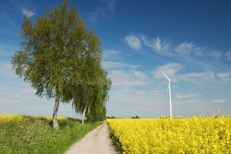 Windturbine auf Feld des ölrapses lizenzfreie stockfotografie