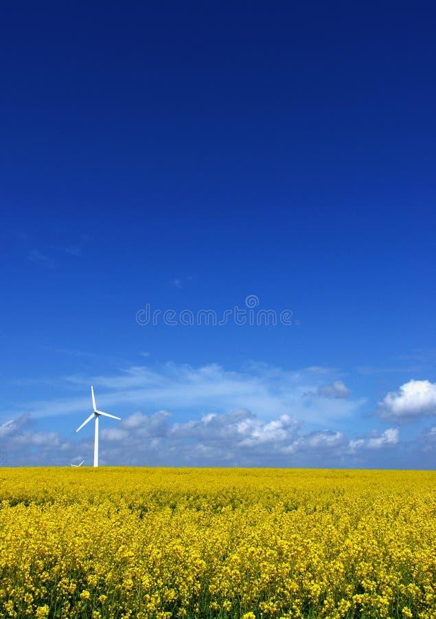 Windturbine auf Rapsfeld stockfoto