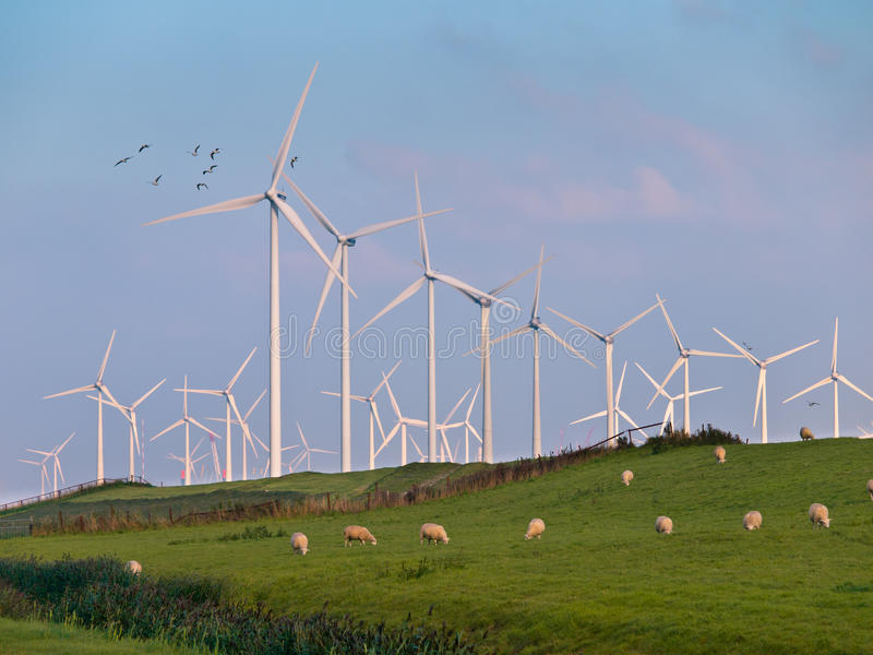 Windturbine en Vogels royalty-vrije stock fotografie