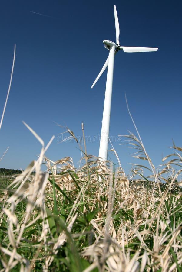 Windturbine in gebiedsbloemen royalty-vrije stock afbeelding