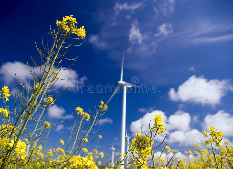 Windturbine, gelbes Feld. stockfotos