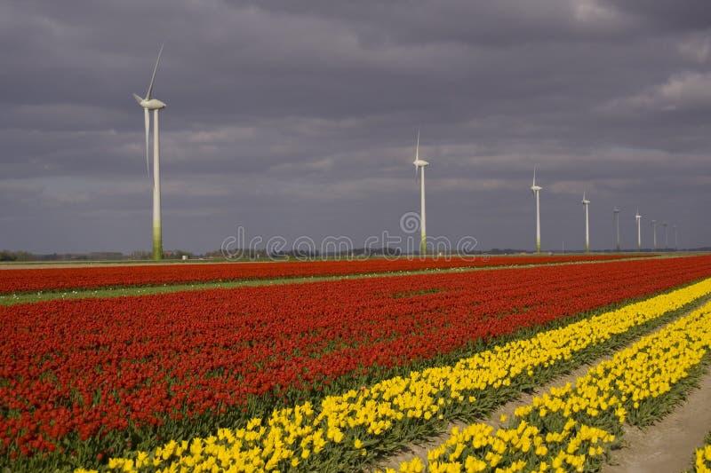 windturbine kolorowe pola zdjęcie stock