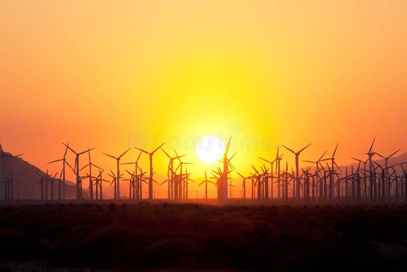 Windturbiner på solnedgången royaltyfri bild