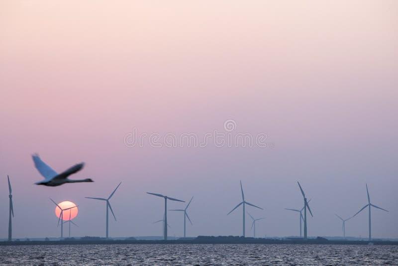 Windturbines en zwaan in kleurrijke hemel met rode zon stock foto