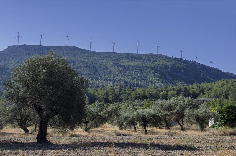 Windturbines op de berg en de olijfgaard stock afbeelding