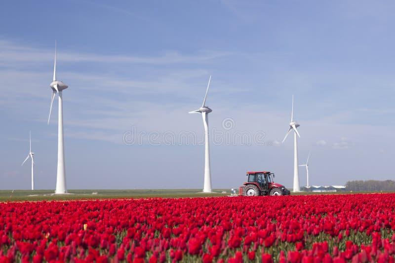Windturbines tegen blauwe hemel en rood tulpengebied in Holland pl stock foto